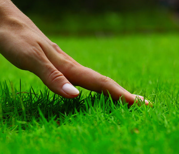 hand touching green grass