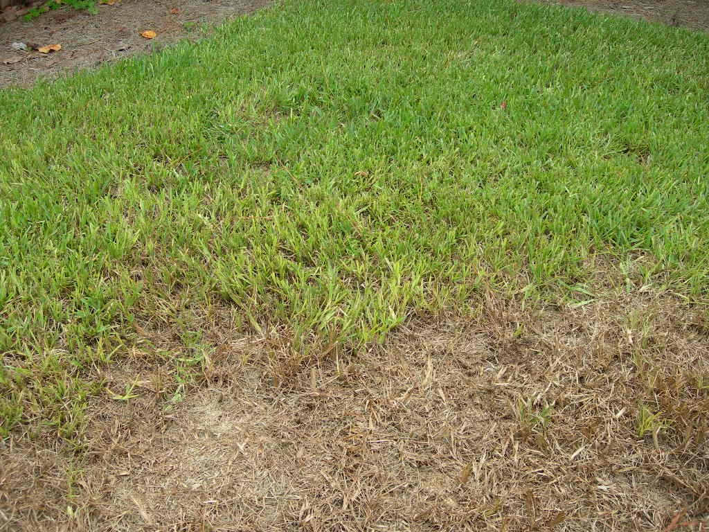 Are You Bugged by Brown Spots in Your Lawn?
