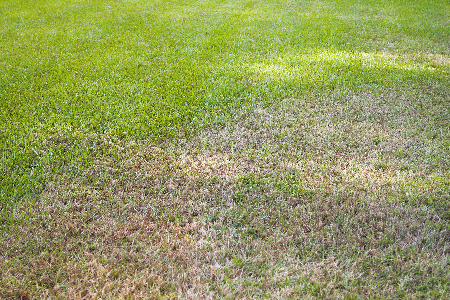 Late-Year Brown Spots? Think Sod Webworms and Armyworms